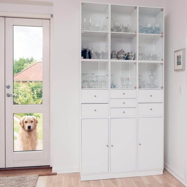 hund kigger ind ad døren